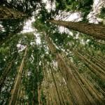 bois-ecologie
