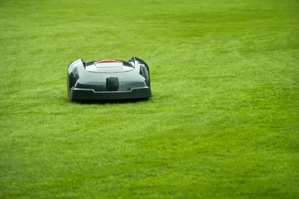 pelouse entretien